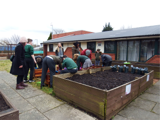 Spuds for Buddies St James pupils planting