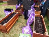 Spuds for Buddies St James pupils planting2