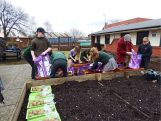 Spuds for Buddies St James pupils planting3