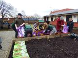Spuds for Buddies St James pupils planting3